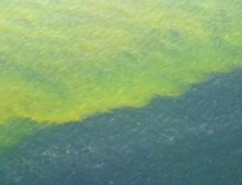 Florida: Everything You Need to Know about Red Tide