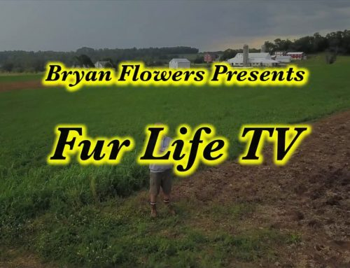 FUR LIFE SEASON 4 – EPISODE 4 TRAPPING WITH PCS OUTDOORS
